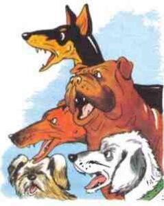 Собаки скандалят житков