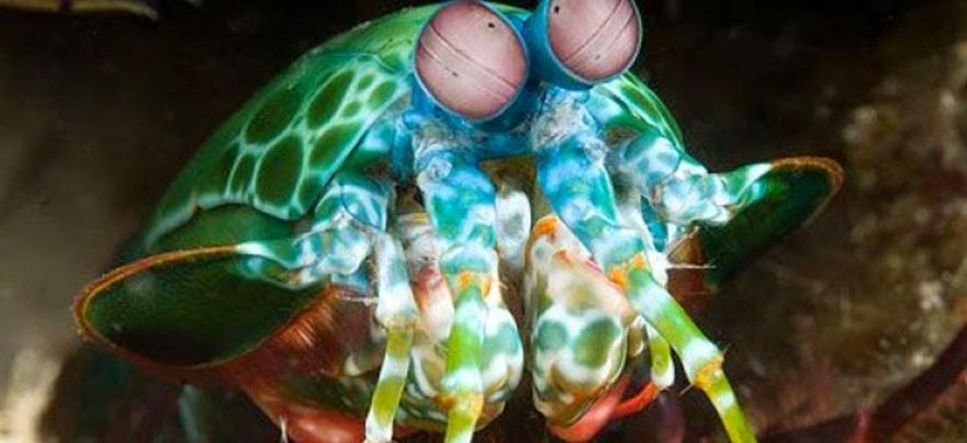 Диковинные животные и морские обитатели. Фото. | uskazok.ru